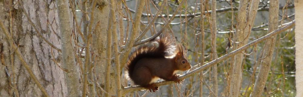 Un écureuil sur une branche